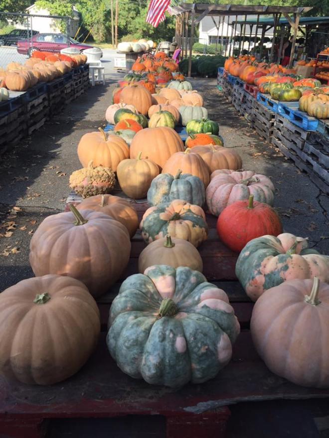 Concord_Produce_Pumpkins.jpg